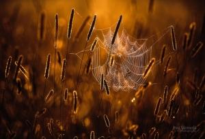Структуры и формы природы в фотографии Джони Ниемела