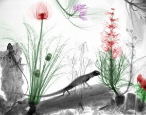 Рентгеновские снимки как искусство от  Арье Вант Рита (Arie van't Riet)