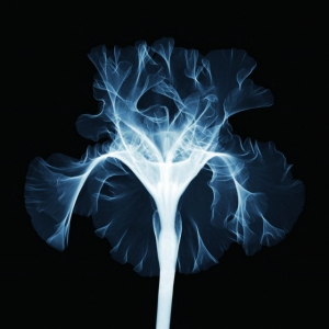 Красота в глубине: рентгеновские фотографии Ника Визи