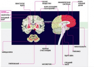 Программы и вирусы человеческого мозга