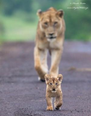 Психология объясняет, почему так популярны фотографии детёнышей животных