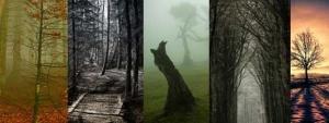 Вдохновляющие примеры фотографий природы