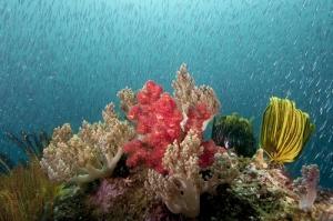Неизведанная океаническая жизнь в подводной фотографии Энди Лернера